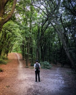 A person stands at the dividing point of two walking paths